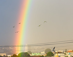 Arco-ris + alegria das maritacas (Lcia Lrio) Tags: rain brasil rainbow chuva arcoris gois catalo
