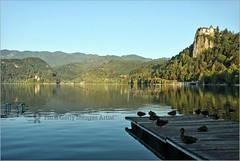 Bled Castle and Lake in the early morning (Stefan Cioata) Tags: morning lake alps castle tourism church nature water beautiful lines birds reflections relax island photography early photo julian europe image sale great stock ducks calm best explore upper slovenia bled getty destination top10 fortress available outstanding glacial jezero touristical blejsko carniola flickrandroidapp:filter=none