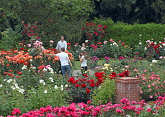 International Rose Test Garden (sandy richard) Tags: usa gardens oregon portland unitedstates sandyrichard sandrarichard