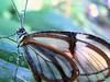 Spirit of the forest (hartp) Tags: brown white color colour wet colors butterfly d50 catchycolors nikon braun farbe nas farben schmetterling weis helluva feucht welltaken hartp hartp94315 wowiekazowie macromix
