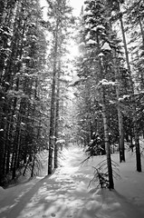 Sun, Snow, Wind (Julie Rideout) Tags: trees blackandwhite sun snowy windy blowingsnow rockymountainnationalpark julierideout