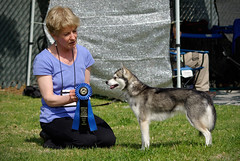 Kirin (Alexandra Kimbrough) Tags: show california dog miniature husky mini stack kai nordic claremont northern klee alaskan ukc conformation akk