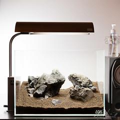ADA Mini M Aquascape (Stu Worrall Photography) Tags: wood ada tank stu mini m nano manzanita aquascape planted manzi worrall stuworrall ukaps ukapsorg solarmini powersandspecial