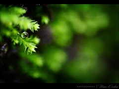 Enlarged..... (Manu Krishna) Tags: snow macro green droplets leaf cool bangalore kerala drop manu wayanad coimbatore trichur reverselens trissur manukrishna manukrishnaphotography