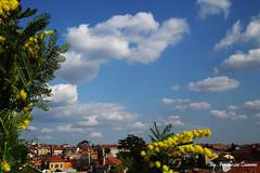 Biella in fiore dal balcone di casa mia (Ferruccio Zanone) Tags: houses sky clouds nuvole case cielo balconies fiori mimosa biella balcone flowersbiellamimosacielonuvolecasebalconefioriskycloudshousesbalconies