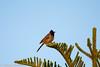IMG_7341L4 (Sharad Medhavi) Tags: bird canoneod50d birdsandbeesoflakeshorehomes