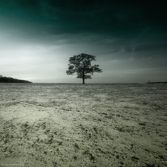 isolation (Jon Downs) Tags: uk trees sky cloud brown white black color colour tree green art colors digital canon downs creativity photography eos grey photo jon flickr artist colours photographer image united gray creative picture kingdom pic photograph 7d joydivision isolation milton keynes jondowns