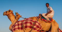 Deserts and Camels 131107 17_14_10_01 (Renzo Ottaviano) Tags: race al dubai desert united racing course emirates camel arab lorenzo races camels corrida emirate deserts uniti renzo unis arabi carrera corsa emirati unidos camellos chameaux rabes kamelrennen   arabes ottaviano camelos emiratos emirados vereinigte arabische cammelli emiratiarabiuniti mirats     marmoun