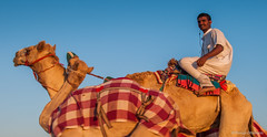 Deserts and Camels 131107 17_14_10_01 (Renzo Ottaviano) Tags: race al dubai desert united racing course emirates camel arab lorenzo races camels corrida emirate deserts uniti renzo unis arabi carrera corsa emirati unidos camellos chameaux árabes kamelrennen صحراء سباق arabes ottaviano camelos emiratos emirados vereinigte arabische cammelli emiratiarabiuniti émirats الهجن هجن سباقات المرموم marmoun