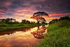 Tree of life... (fiz_zero) Tags: world trees sunset sky reflection tree nature water clouds reflections asian landscapes nikon asia skies sigma sunsets malaysia colourful worldclass sigma1020mm singhray d7100 sungaibesar reversegnd nikond7100
