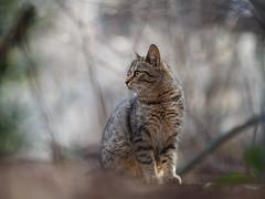 Street cat 128 (Yalitas) Tags: pet cats cat canon kitten kat feline chat kitty gato felino katze katzen kot kedi kass ktzchen gatta streetcat kotka  kocka  katte   katzchen kottur