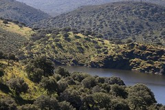 Encinares (ramosblancor) Tags: paisajes naturaleza primavera nature forest landscapes nationalpark spring monfrage extremadura encinas holmoak parquenacional quercusilex encinares mediterraneanforest montemediterrneo