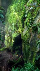 Indischer Dschungel 2 (shutter2005) Tags: plant tree outdoor selva jungle indien moos dschungel djungel jungel orman oerwoud shutter2005 giungla dungla  viidakko dzsungel dungle    frumskgur