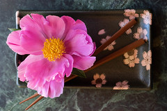 peony on sushi plate (Samantha Forsberg) Tags: flowers flower floral flora peony botany floralart sushiplate