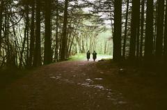 The Forest (strzez wartosci) Tags: film analog forest scotland highlands minolta hiking rangefinder trail westhighlandway minoltahimatic