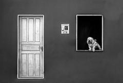 White dog on window (hzeta) Tags: white dog window perro blanco ventana little pequeo perrito door puerta casa house barking ladrando minimalism minimalismo geometry geometria fachada black y negro bw bn
