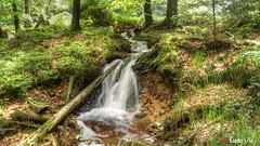 Ternell - 07 (Ld\/) Tags: nature waterfall juin belgium belgique belgie ardennen ardennes eifel belgian venn cascade hoge hautes fagnes 2016 ardenne venen eupen hohes ternell
