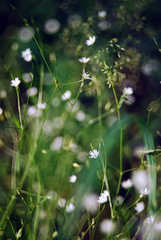 (Tamara Magomedova) Tags: flowers light summer plant blur detail macro green nature colors field grass leaves fairytale season landscape flora soft bright bokeh outdoor ukraine downhill flare dreamy wildflowers blooms magical kiev shining depth catchy sparkling shimmering helios44 helios442