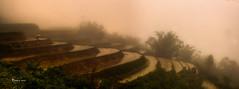 Fog rice terraces (Stilnados) Tags: fog rice terraces vietnam sapa