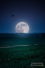 The Night of the Full Moon (Benjamin Root Photography) Tags: summer moon bird june night full fireflies lightningbugs