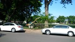Tree Limb Down in Fuller Park #1 (artistmac) Tags: park street chicago tree fence illinois outdoor wroughtiron il repair fallen southside bent limb fuller fullerpark michaelbrown superintendent workorder blowndown hispark lethimactlikeitforachange