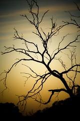 (Marianne Ellis) Tags: sunset orange tree nature beauty canon landscape quiet peace artistic relaxing australia calm colourful spiritual healing stillness stockimages victoira rightsmanaged adobelightroom canon450d artisticphotograpghy mygearandme excelphotography marianneellis
