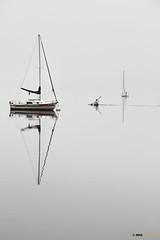 Niebla en el pantano (Josepargil) Tags: