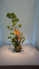 Ikebana work with Strelizia and pine (Otomodachi) Tags: flowers station pine japanese kyoto 33 ikebana railway jr exhibition event exposition bloemen expositie tentoonstelling japans jrline strelizia bloemschikken pijnboom naaldboom bloemsierkunst papgeaaibloem