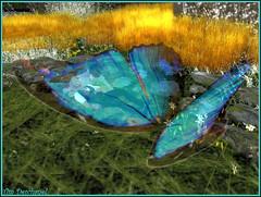 Sous un battement d'aile ... (Tim Deschanel) Tags: life love butterfly tim couple avatar sl papillon amour destiny passion second bonheur deschanel deesselle
