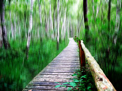 Wooden Path in the Birch Forest (Batikart) Tags: park wood travel su