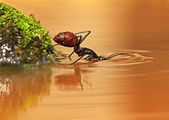 snorkelling (shikhei) Tags: snorkelling specialpicture specinsect shikhei