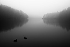 morning has broken (me-graphy) Tags: morning light bw white mist lake black bird nature water misty fog forest see licht early duck nikon wasser shadows nebel natur foggy ducks lonely enten ente wald schatten einsamkeit frh nebelig megraphy