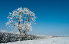 The Tree (*KarenT*) Tags: winter snow cold tree ice field frost lincolnshire hedge february