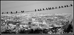 La terrazza sulla citt (DeltaS4) Tags: blackandwhite snow birds bn uccelli neve biancoenero campobasso