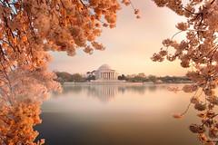 Jefferson Memorial through cherry blossoms (cZulander) Tags: longexposure sunset cherry dc washington nikon blossom jeffersonmemorial afs tidalbasin 2485mm d700