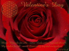 Walentynki - Valentinstag - Valentine's Day (arjuna_zbycho) Tags: love heart herz liebe valentinesday valentinstag mio serce walentynki dziezakochanych