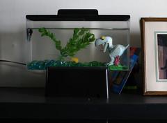fish tank betta trex