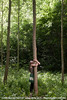 "[Création] Langue des Bois - Cie Huppée / Eguisheim / 13.06.10 • <a style=""font-size:0.8em;"" href=""http://www.flickr.com/photos/30248136@N08/6890987835/"" target=""_blank"">View on Flickr</a>"