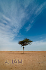 Al Thakira (Jun Qatar // Love Nature) Tags: sky panorama rock skyline digital photo sand nikon flickr gulf shot desert middleeast wideangle best tokina arab date nikkor sanddune doha qatar bestshot d90 1116mm daghfal