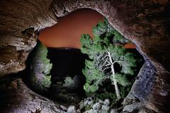 Nocturnidad en la cueva Horadada (Jose Casielles) Tags: naturaleza noche arboles nocturna rocas iluminacion yecla fuerza nocturnidad linternas horadada magnetismo arabí montearabí fotografíasjcasielles cuevahoradada montemagico