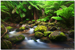 IMG_2984 (Steve Daggar) Tags: creek waterfall rainforest stream forrest tasmania stcolumbus
