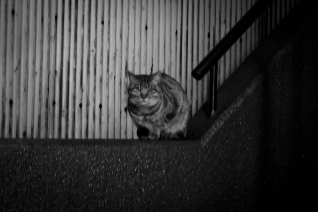 Today's Cat@2012-02-20