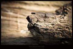 The Decaying Life (memoriesofsolitude) Tags: abstract canon kochi 70300 eos550 eos550d arunsankar arunsankarphotography