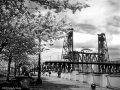 Steele Bridge and Cherry Blossoms, May 2011 (Gary L. Quay) Tags: bridge film oregon photoshop river portland cherry spring downtown nw pacific northwest kodak blossoms quay hasselblad gary pdx willamette steele waterfrontpark carlzeiss tommccall foolscape garylquay foolscapeimagery 500ck