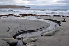 Flowing Towards The Sea (E Mlr) Tags: seaweed beach sand orkney rocks bayofskaill mygearandme