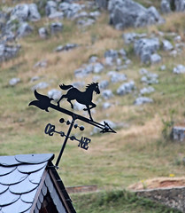 Where the wind blows (Mikaela Vazquez Rico) Tags: espaa horse mountain spain wind south north asturias direction pointing len lillo boar