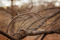 Warmth (Marcela Lucero) Tags: park winter red toronto highpark brotes
