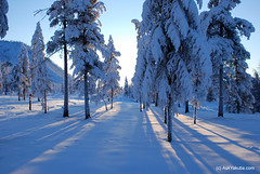 DSC_2280 (bolotbootur) Tags: travel winter snow cold weather reindeer russia deer siberia fareast sledge yakutia evens siberiarussia sakharepublic oymyakon ojmjakon yakutiya reindeersleddingwithevennomadsinoymyakon