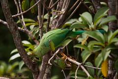 IMG_6858L4 (Sharad Medhavi) Tags: bird canonef100400mmf4556lisusm canoneod50d birdsandbeesoflakeshorehomes