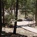 Whitetail Campground #19